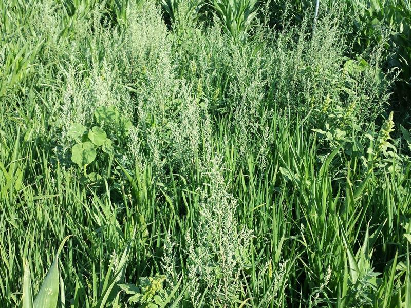 herbicidaWEB10