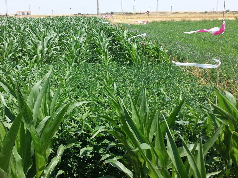 herbicidaWEB11