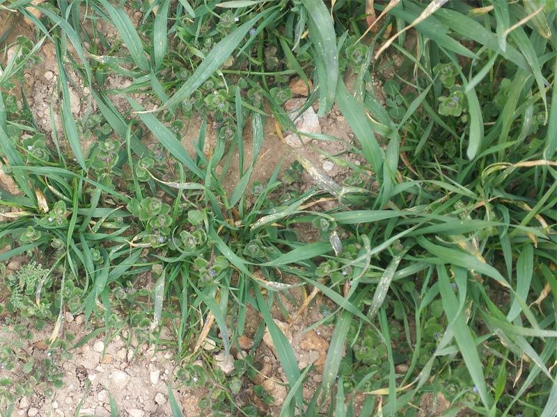 herbicidaWEB15