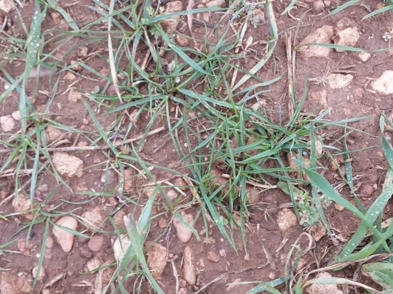 herbicidaWEB16