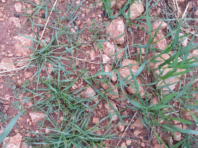 herbicidaWEB17
