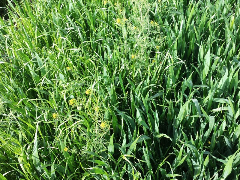 herbicidaWEB19