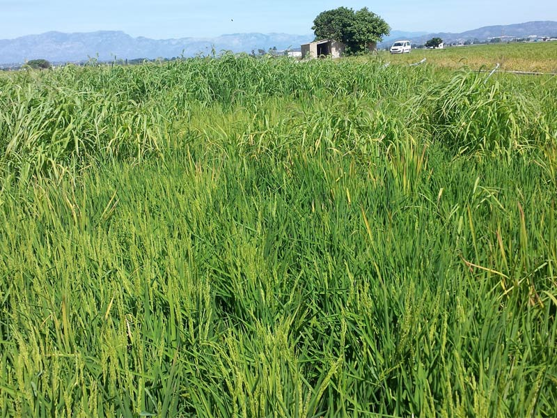 herbicidaWEB6