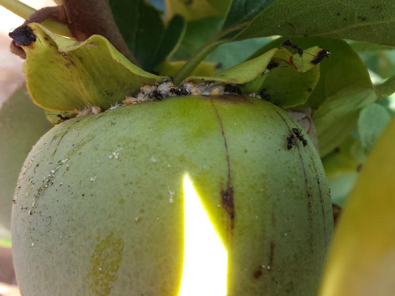 insecticidaWEB17